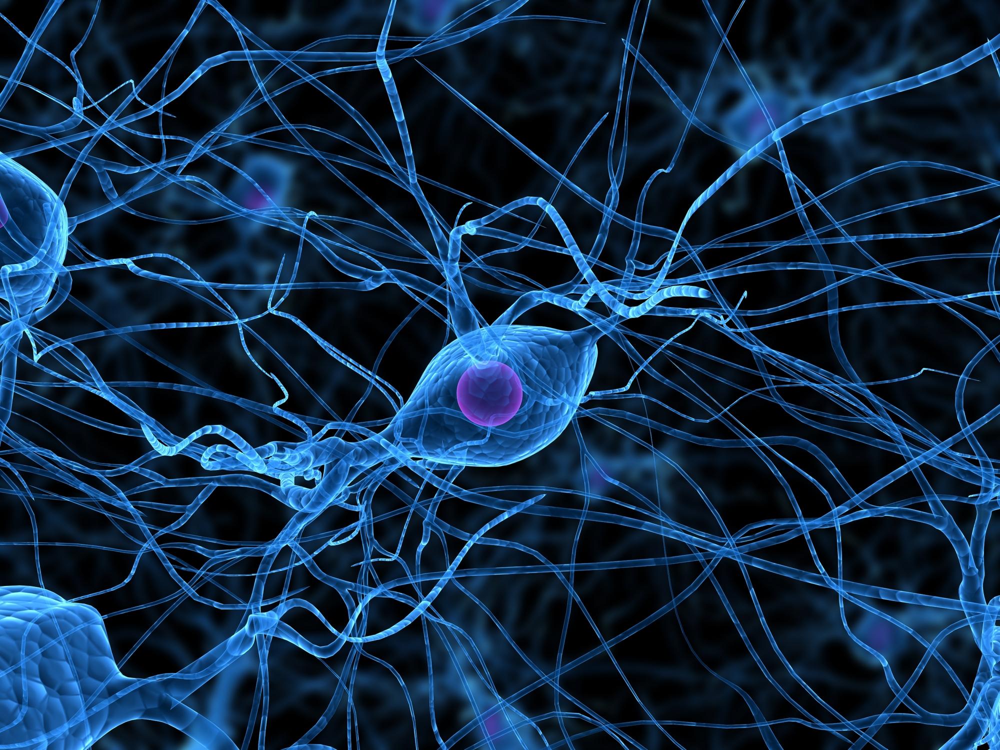 illustration-of-human-nerve-cells_dreamstime_5498780